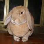 Pal Witucki, mascot # 6. Photo by Barbara Witucki.