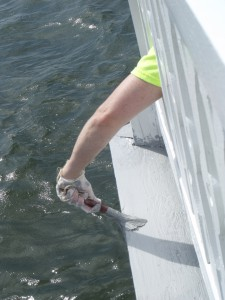 You need to be agile to work on a lighthouse. Cory's arm reaching thru to paint exterior deck boards.