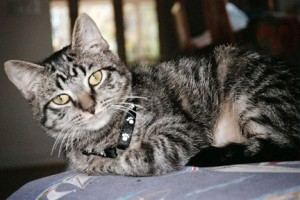 Oliver, June 2011. Photo courtesy of Maria Alvarez-Lundie.