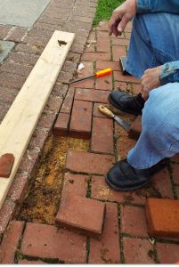 Leveling the bricks that had settled below walk.
